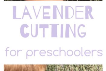 Lavender Cutting for Preschoolers