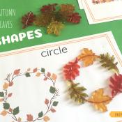 autumn leaf shapes