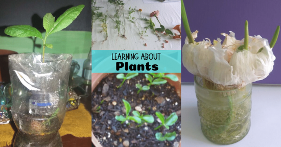Learning about plants fb