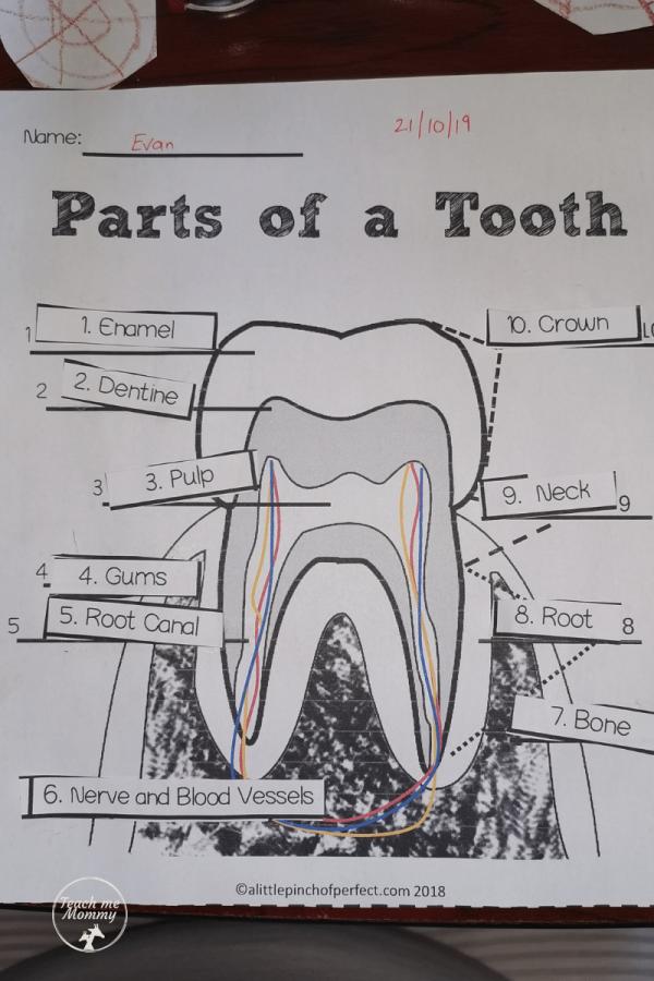 Tooth Fairy Fun 2