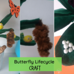 Butterfly lifecycle fb