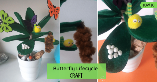 Lifecycle of butterfly craft