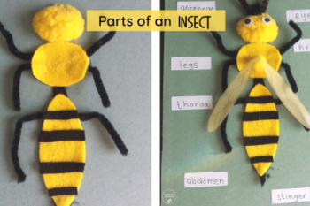 Parts of an Insect