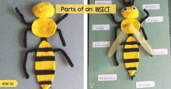 Parts of an insect fb