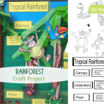 Rainforest fb
