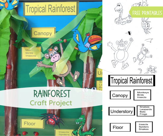 Rainforest project fb