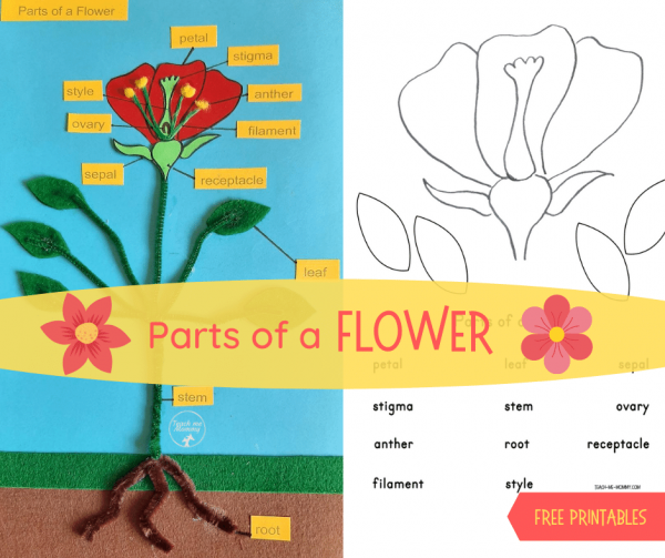 Parts of a Flower Project fb