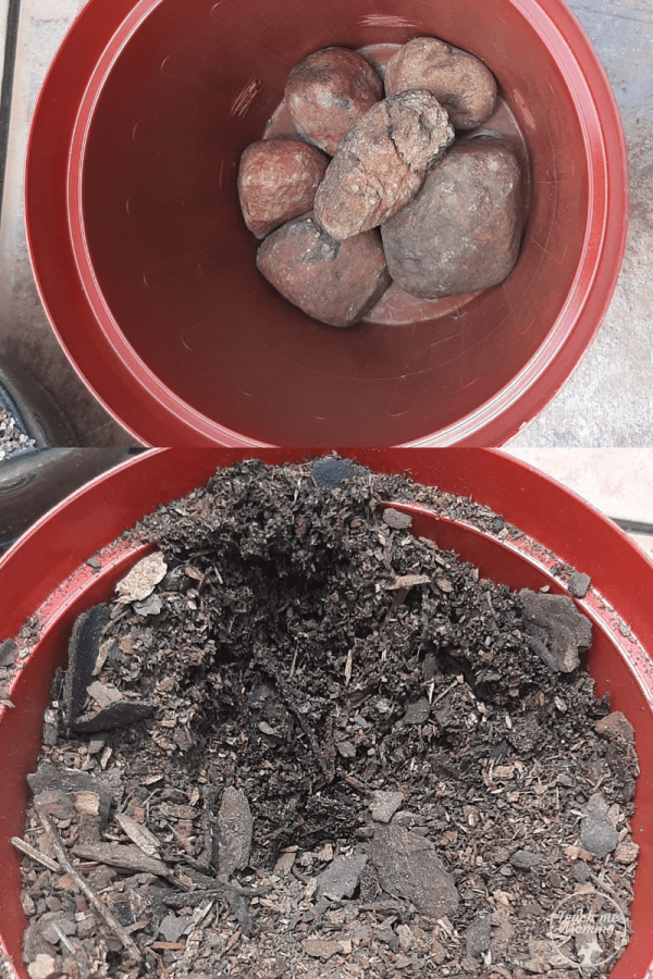 Rocks and soil in pot