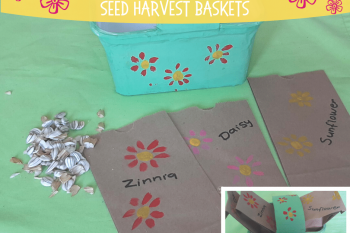 Seed Harvest Baskets